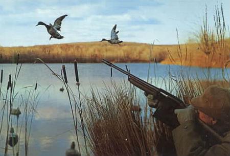 Для любителей охоты: где купить утку крякву?